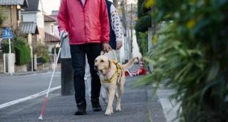 盲導犬のいない側の安全を確認するため、白杖を路面に滑らせながら歩きます。