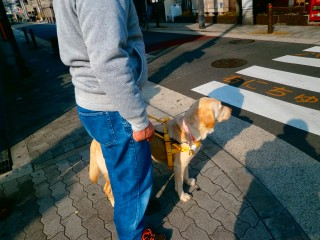 交差点で止まります。みなさんがこんな場面に出会った時、「赤ですよ」「青ですよ」と声をかけて下さると、安心して渡れます。